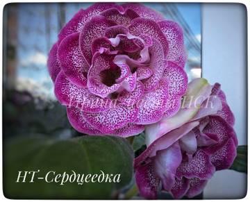 http://sa.uploads.ru/t/gPM7K.jpg