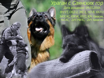 http://sa.uploads.ru/t/hVoC8.jpg