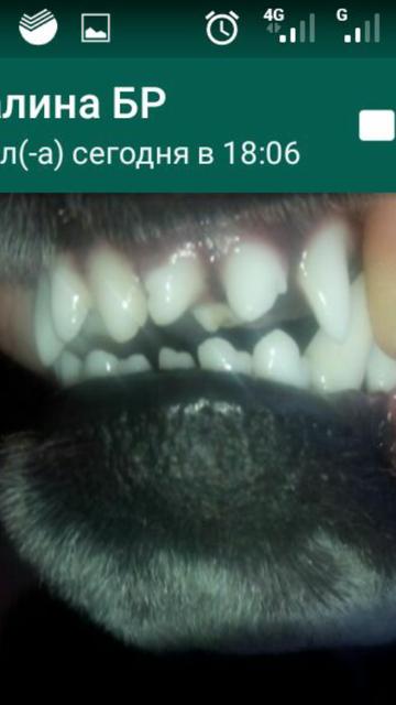 http://sa.uploads.ru/t/jNYfl.png