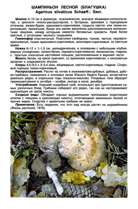 http://sa.uploads.ru/t/k9iAX.jpg