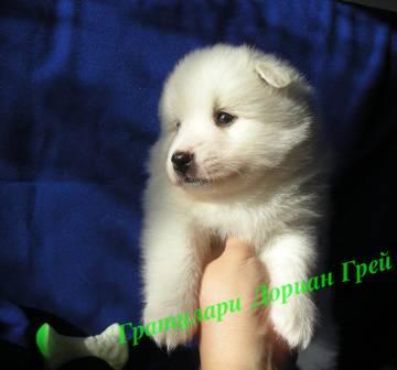http://sa.uploads.ru/t/kWlpu.jpg