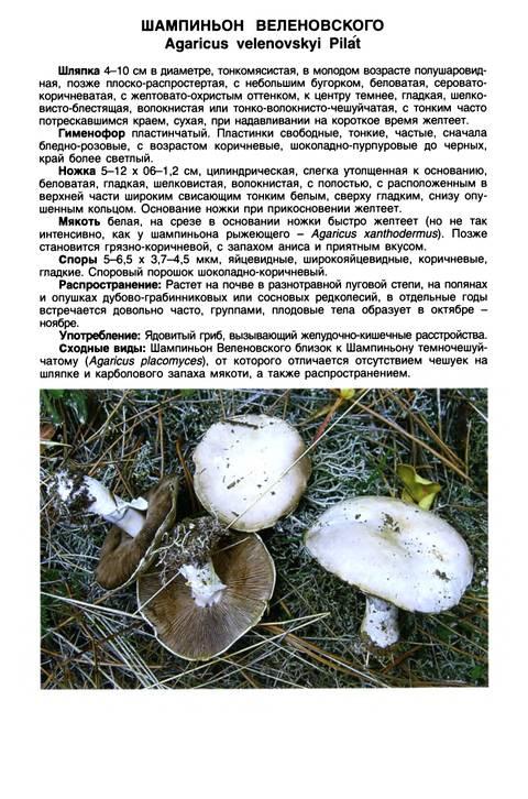 http://sa.uploads.ru/t/lZn9K.jpg
