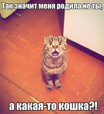 http://sa.uploads.ru/t/ljbP5.jpg