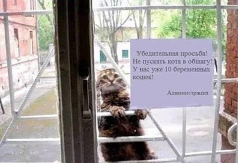 http://sa.uploads.ru/t/maOZo.jpg