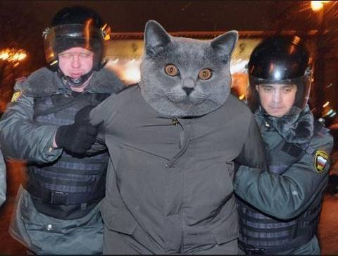 http://sa.uploads.ru/t/mcE1u.jpg