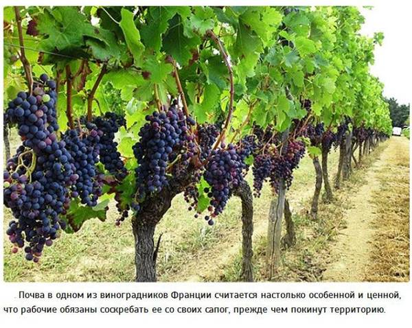http://sa.uploads.ru/t/muVzF.jpg