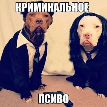 http://sa.uploads.ru/t/nXt1C.jpg