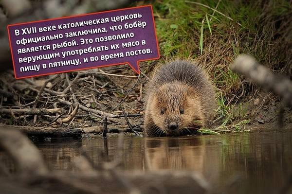http://sa.uploads.ru/t/nstQd.jpg