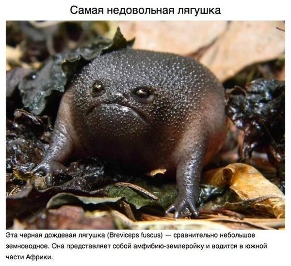 http://sa.uploads.ru/t/ohn3s.jpg