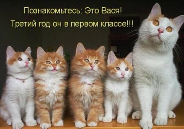 http://sa.uploads.ru/t/qOhHu.jpg