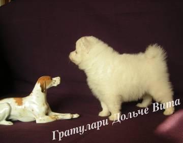 http://sa.uploads.ru/t/r9tv6.jpg