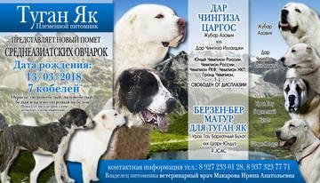 http://sa.uploads.ru/t/sNd3K.jpg