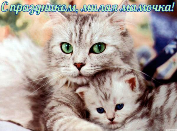 http://sa.uploads.ru/t/uo7Vr.jpg