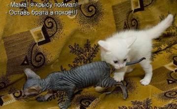 http://sa.uploads.ru/t/vD4mE.jpg