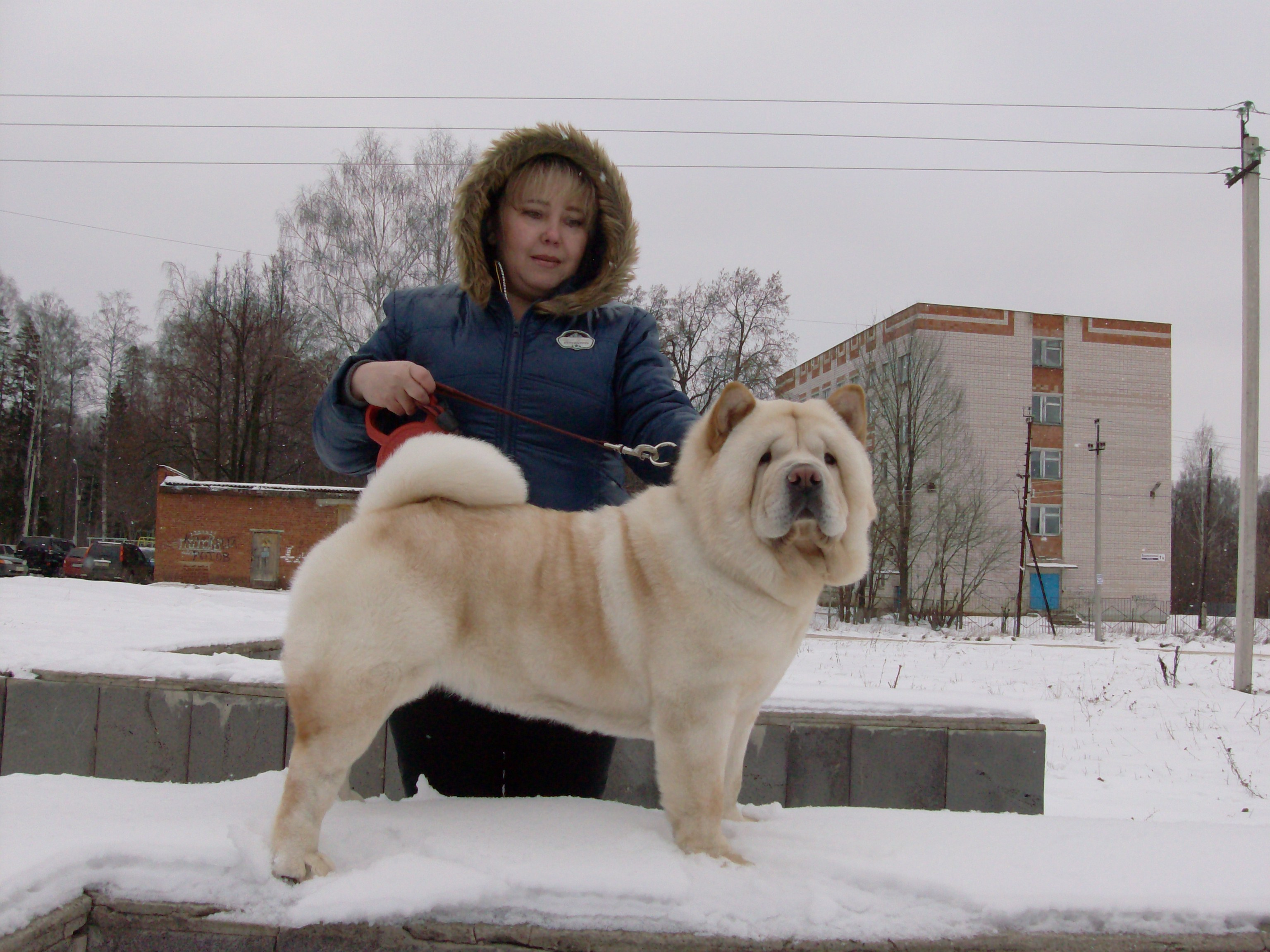 http://sa.uploads.ru/tn3SV.jpg