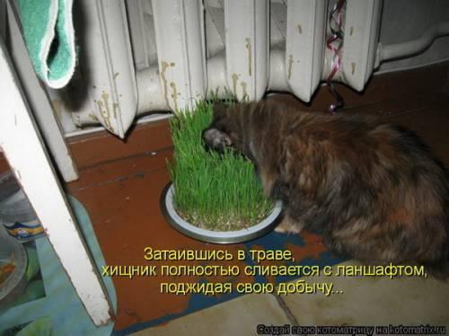 http://sa.uploads.ru/vE5qs.jpg