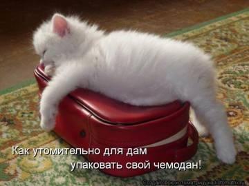 http://sa.uploads.ru/t/15t7C.jpg
