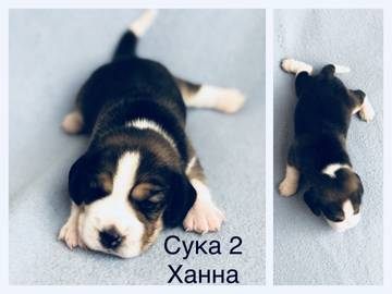 http://sa.uploads.ru/t/5EMvf.jpg