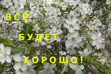 http://sa.uploads.ru/t/HfQYU.png