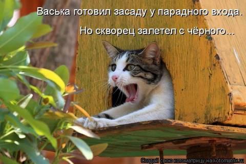 http://sa.uploads.ru/t/SamNB.jpg