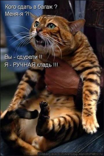 http://sa.uploads.ru/t/Shu3M.jpg