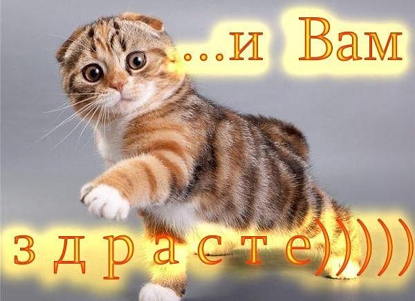 http://sa.uploads.ru/uwvgK.jpg